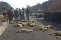 नेशनल हाईवे पर भेड़ों को बस ने कुचला, 13 की मौत, 36 घायल