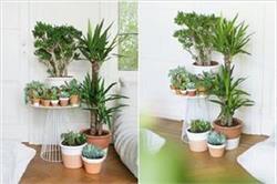 घर में जरूर लगाएं ये 8 पौधे, रात को भी देते हैं ऑक्सीजन