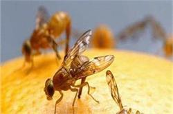 घर में मौजूद इन कीड़ें-मकौड़ों से परेशान है तो अपनाएं ये घरेलू नुस्खें