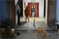 एक मंदिर ऐसा भी जहां आरती में इंसानों के साथ जानवर भी होते हैं शामिल