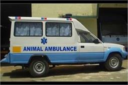 इन 2 टीवी एक्ट्रेसेस ने जानवरों के लिए शुरू की है एंबुलेंस सर्विस