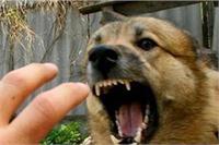 अावारा कुत्ते ने 8 महीने के बच्चे को नोच नोच कर खाया