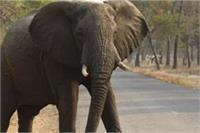 युवक काे हाथी के साथ मस्ती करना पड़ा महंगा