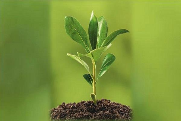 फसल को कीड़ों से बचाएगा यह खास किस्म का पौधा