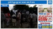 गौ रक्षकों ने ट्राले में ठूस ठूसकर भरी करीब 30 गायों को छुड़ाया