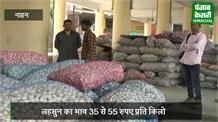 सिरमौर के लहसुन की साउथ में बढ़ी डिमांड, उत्पादकों को मिल रहे अच्छे दाम