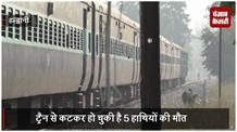 वन जीवों को बचाने की कवायद शुरू, वन और रेलवे अधिकारियों ने की बैठक