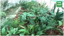 सरकार ने लिया बड़ा फैसला, इस वजह से नहीं होगा प्रदेश में विदेशी पौधों का आयात