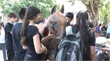 घोड़ों पर हो रहे जुल्म के खिलाफ 'पेटा' का अनोखा प्रदर्शन
