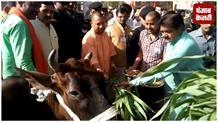 सीएम योगी ने दिखाई स्कूल चलो अभियान को हरी झंडी, गाय को खिलाया चारा