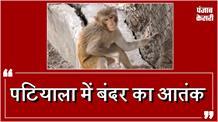 Patiala में बंदर ने मचाया आतंक