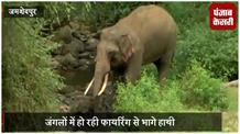 दलमा के जंगल में हाथियों की सख्यां हुई कम, विभाग परेशान
