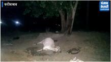 गाय को कुएं से निकालने उतरे युवक काल का ग्रास बने