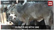 22 बैलों से लदा कंटेनर जब्त, पुलिस को देखकर फरार हो गए पशु तस्कर