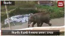 हाथी ने मचाया जमकर उत्पात, बछड़े को उतारा मौत के घाट