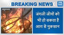 यमुनानगर के नेशनल फॉरेस्ट एरिया में लगी आग