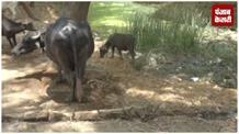बुंदेलखंड के गांव में नहीं है पानी की कमी, जखनी गांव के किसानों ने दिखाया सरकार को आईना