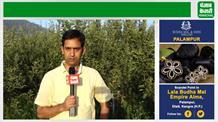 सेब की खेती को नया आयाम दे रहा यह युवा बागवान, देखिए पंजाब केसरी की खास रिपोर्ट