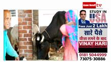 Muslim girl ने कायम की मिसाल, घर में बनाई Gaushala
