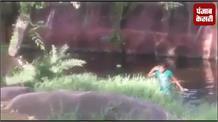 शराब के नशे में शेर के पिंजरे में जा गिरा व्यक्ति, वीडयो हुआ viral