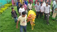 जब गांव में कराई गई गाय और बैल की शादी