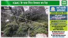 शिमला IGMC के पास बिजली की तारों पर गिरा पेड़, बाल-बाल बची HRTC टैक्सी