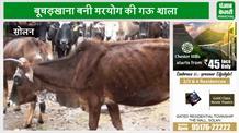 OMG! गायों के लिए गऊशाला नहीं कब्रिस्तान, वीडियो में खुल रही पोल
