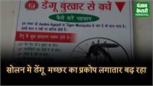 सोलन में डेंगू की दहशत, 1150 मामले पॉजिटिव