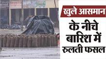 बारिश में paddy crop बरबाद, दाना मंडी में भीगी अनाज की बोरियाँ