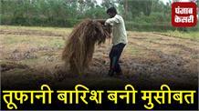 तूफानी बारिश बनी मुसीबत, किसानों की मेहनत पर फेरा पानी