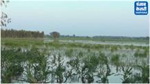 बारिश के पानी ने मचाई तबाही, किसानों के खेत हुए जलमग्न