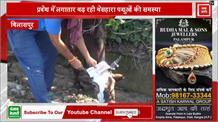 प्रदेश में लगातार बढ़ रही बेसहारा पशुओं की संख्या , अब समाजसेवी सुनील ने शुरू की ये अनोखी पहल