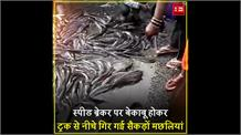 कानपुर की सड़कों पर नजर आया मछलियों का सैलाब, लूटने के लिए हर कोई दिखा बेताब