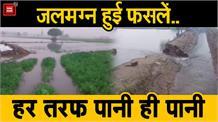 माइनर टूटने से किसानों की सैकड़ों एकड़ फसल हुई जलमग्न, मुआवजा देने की मांग