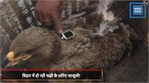 बिहार: संदिग्ध पक्षी के डैने में लगा था हाई रिजोल्यूशन कैमरा, पाकिस्तान कर रहा जासूसी!