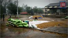 खुले आसमान के नीचे पड़ी हजारों क्विंटल धान की फसल बर्बाद, खून के आंसू रो रहे किसान