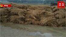 BHOJPUR:  बारिश ने किसानों की मेहनत पर फेरा पानी, खलिहानों में पड़ी और कटी हुई फसल बर्बाद