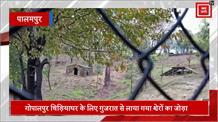 CM का पालमपुर दौरा रद्द, अब कल चिड़ियाघर में दिखेंगे गुजराती शेर