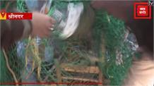रिहायशी इलाके में गुलदार का आतंक जारी, घर के स्टोर रूम में घुसा गुलदार का शावक