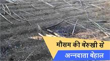 सोलन में मौसम की बेरुखी से सूख रहे हैं खेत, किसान परेशान