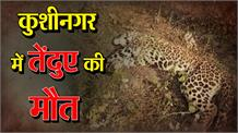 खाने की तलाश में गांव पहुंचा तेंदुआ, गड्ढे में गिरने से हुई मौत