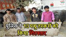फतेहपुर में पुलिस ने की कार्रवाई, 13 पशु तस्करों को किया गिरफ्तार