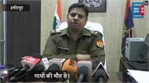 हमीरपुर में 36 गायों की मौत, प्रशासन में मचा हड़कंप