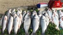 पटना में 15 दिनों के लिए मछली पर बैन, लोकल मछली विक्रेताओं ने जताई रोक पर नाराजगी