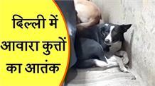 दिल्ली में आवारा कुत्तों का आतंक, कई लोग बन चुके हैं शिकार