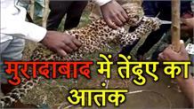 ग्रामीणों ने तेंदुए के शावक को पकड़कर वन विभाग को सौंपा