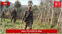 नक्सली कर रहे थे अफीम की खेती, पुलिस की टीम ने 60 एकड़ में लगी फसलों का किया नष्ट