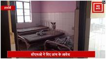 इस अस्पताल में मरीजों की जगह बेड पर आराम फरमाते है कुत्ते, वीडियो वायरल