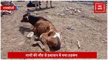 योगी सरकार में गौशाला का बुरा हाल, भूख से तड़पकर मर रही है गायें
