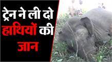 थम नहीं रही हाथियों के साथ दुर्घटनाएं,ट्रेन से टकराकर दो हाथियों की मौत